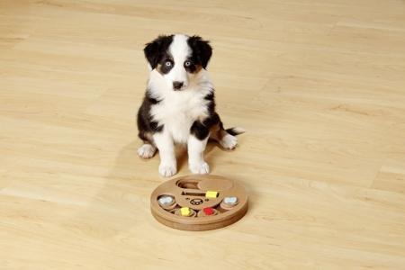 Aktiv-Spielzeug Doggy Brain Train BONEY