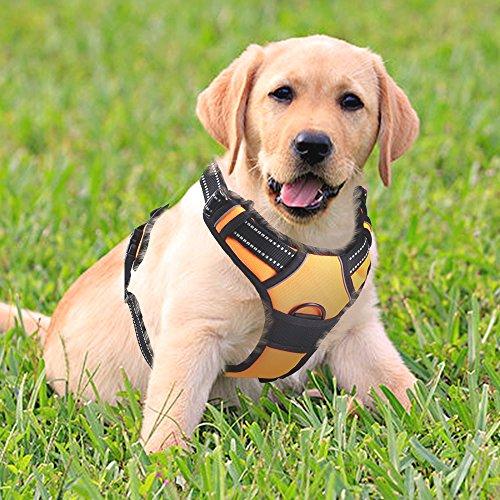 Rabbitgoo No-Pull-Hundegeschirr einstellbar weich Brustgeschirr einfach sicher Kontrolle bequem für Hunde Haustier
